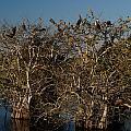 The Anhinga Trees by John Wall