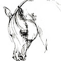 The Arabian Horse Sketch by Angel Ciesniarska