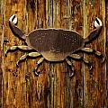 The Art Of The Crab by Image Takers Photography LLC - Carol Haddon