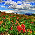 The Art Of Wildflowers by Scott Mahon