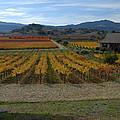 The Artist In The Vineyard by Debra Wales