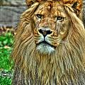 The Attentive Lazy Boy At The Buffalo Zoo by Michael Frank Jr