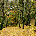 The Autumn Path by Paulo Monteiro