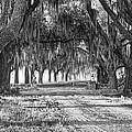 The Avenue Of Oaks by Scott Hansen
