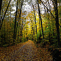 The Back Roads Of Autumn by David Patterson