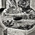 The Backyard by Lori-Anne Fay