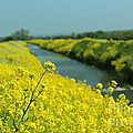 The Banks Of Yellow by Rene Triay Photography