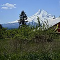 The Barn And  Mt. Hood by Image Takers Photography LLC - Laura Morgan