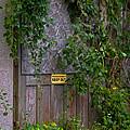 The Barn Door by Carolyn Fox