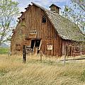 the Barn  by Fran Riley