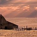 The Barn Lot by Randall Branham