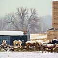 The Barn Yard by Steven Reed