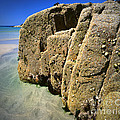 The Beach by Edmund Nagele