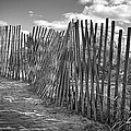 The Beach Fence by Scott Norris