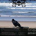 The Beach Raven