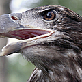 The Beak Of A Preator by Bob Slitzan