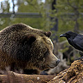 The Bear And Crow by Jolie Chantharath