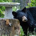 The Bear Cub With An Itch by Matt Swinden