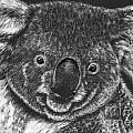 The Bear From Down Under by Lora Duguay