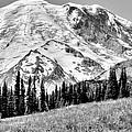 The Beautiful Mount Rainier At Sunrise Park - Washington State by David Patterson