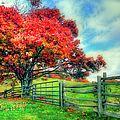 The Beauty Of Fall II - Blue Ridge Parkway by Dan Carmichael