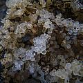 The Beauty Of Herring Roe by Roxy Hurtubise