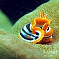 The Beauty Of The Depths by Saleh Bukhasmseen