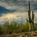 The Beauty Of The Desert Southwest  by Saija  Lehtonen