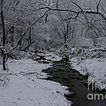 The Beauty Of Winter by Kitrina Arbuckle