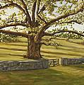 The Bedford Oak Summer by David  Llanos