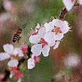 The Bee In The Cherry Tree by Ericamaxine Price