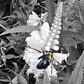 The Bee by Regina McLeroy