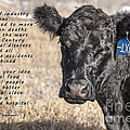 The Beef Industry by Janice Pariza