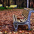 The Bench  by Brian Orlovich