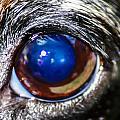 The Big Eye by Stephen Brown