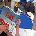 The Bird Brain by Madeline Ellis