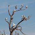 The Bird Tree by John M Bailey