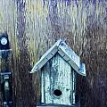 The Birdhouse by Carolyn Fox