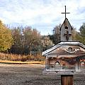 The Birdhouse Kingdom - American Kestrel by Image Takers Photography LLC - Carol Haddon