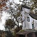 The Birdhouse Kingdom - Mountain Chickadee by Image Takers Photography LLC - Carol Haddon