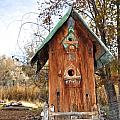 The Birdhouse Kingdom - Spotted Towhee by Image Takers Photography LLC - Carol Haddon