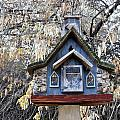 The Birdhouse Kingdom - The Cordilleran Flycatcher by Image Takers Photography LLC - Carol Haddon