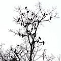 The Birds by Stacey Pollio