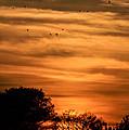 The Birds Still Fly by Christy Usilton
