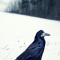 The Black Crow Knows by Edward Fielding