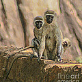 The Black-faced Vervet Monkey by Liz Leyden