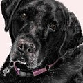 The Black Lab Sweetheart by Lois Ivancin Tavaf