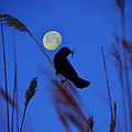 The Blackbird And The Moon by Bill Cannon