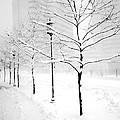 The Blizzard Bw by Mike Nellums