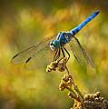 The Blue Dragonfly  by Saija  Lehtonen